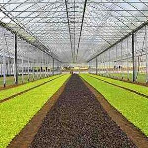 Sensori, sonde e termostati per serre & floricultura